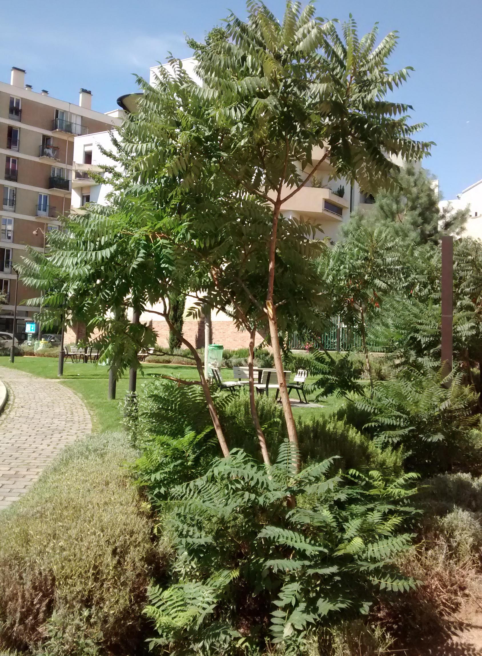 Gc62jah jardin m diterran en de la place de la r union Entretien jardin ile de la reunion